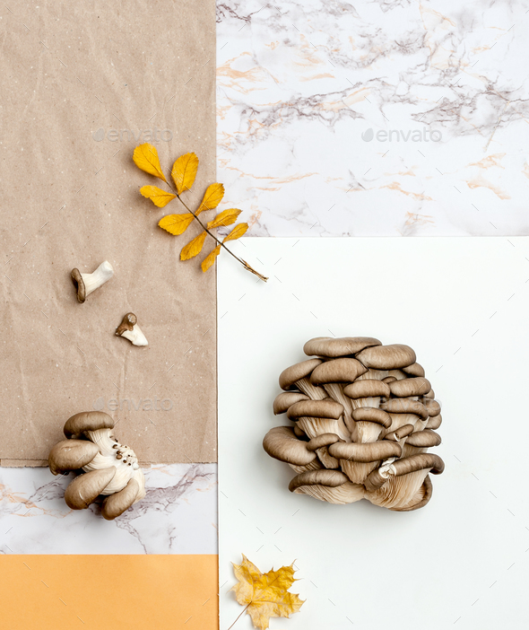 Fresh oyster mushrooms on a combed background of kraft paper, ma - Stock Photo - Images