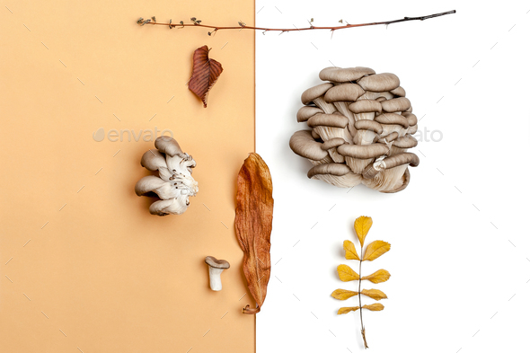 A composition of oyster mushrooms and dry autumn leaves on an or - Stock Photo - Images