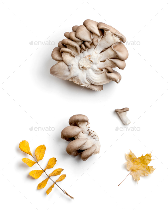 Oyster mushrooms and various dry autumn leaves on a clean white - Stock Photo - Images