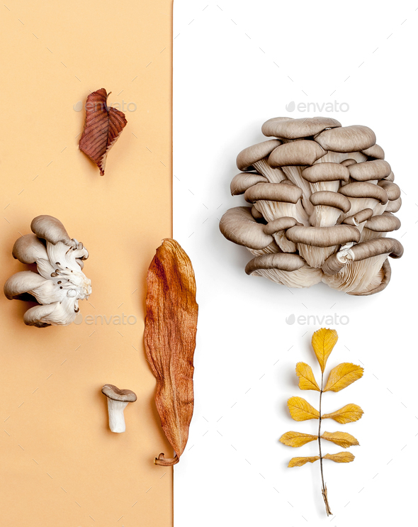 Composition from fresh oyster mushrooms and dry autumn leaves on - Stock Photo - Images