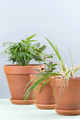 Three potted plants on a bluish-gray background: Areca, Laurel a - PhotoDune Item for Sale