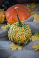 Beautiful decorative pumpkin close-up. - PhotoDune Item for Sale