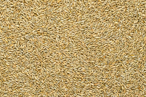 Rye grains, surface and background - Stock Photo - Images