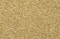 Rye grains, surface and background - PhotoDune Item for Sale