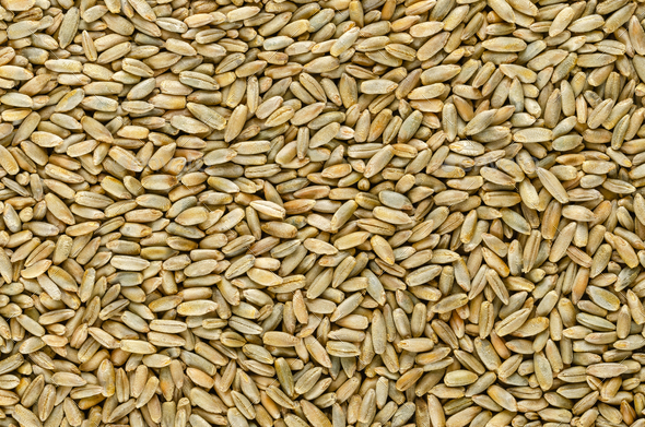 Rye grains, surface, from above - Stock Photo - Images