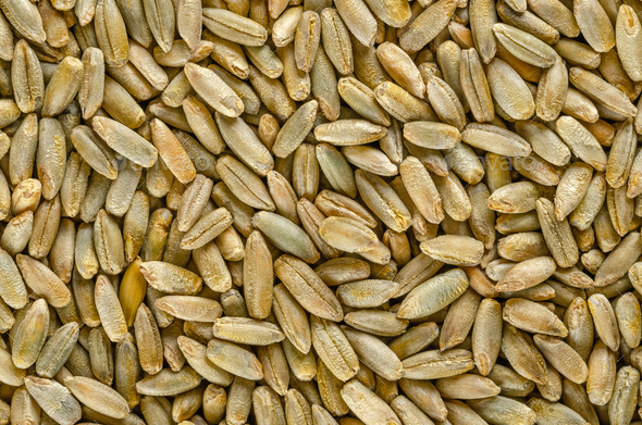 Rye grains, macro photo, from above - Stock Photo - Images