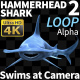 Hammerhead Shark 2 Swims At Camera - VideoHive Item for Sale