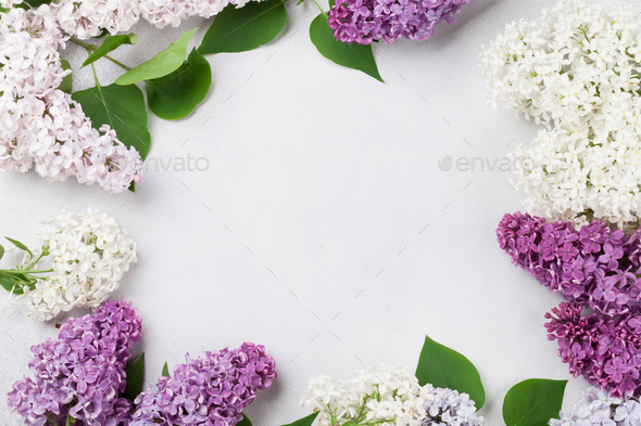 Colorful lilac flowers - Stock Photo - Images