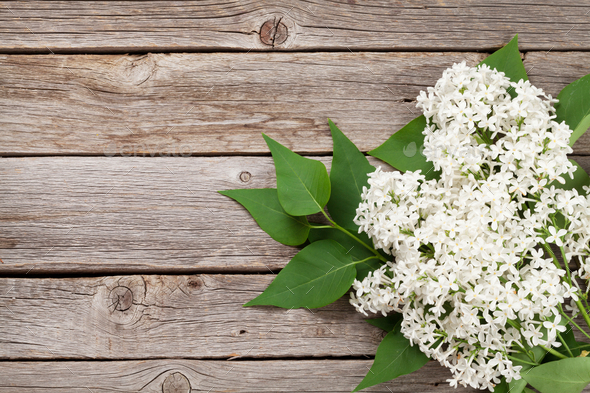White lilac flowers - Stock Photo - Images