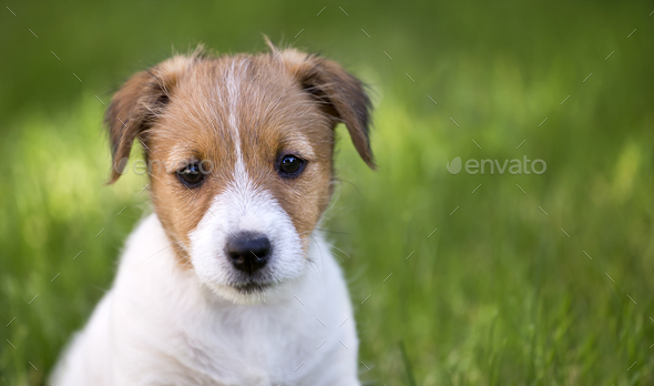 Cute dog puppy looking in the grass - Stock Photo - Images