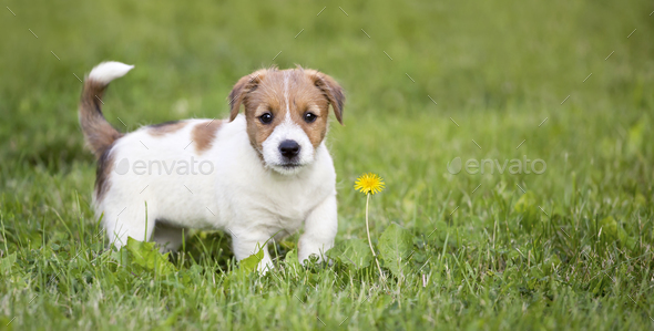 Happy dog puppy looking in the grass - Stock Photo - Images