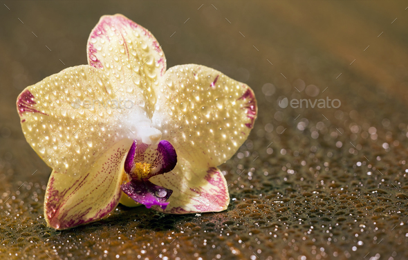 Beautiful orchid flower - Stock Photo - Images