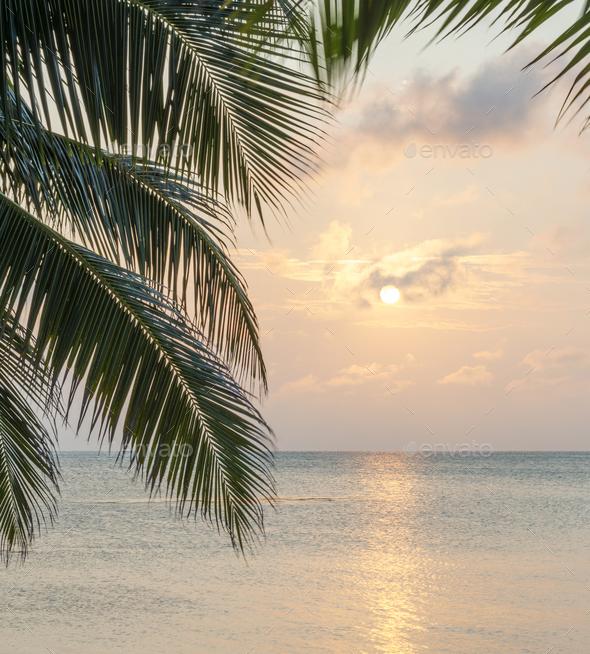 Caribbean Sunrise Palms - Stock Photo - Images