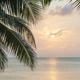 Caribbean Sunrise Palms - PhotoDune Item for Sale