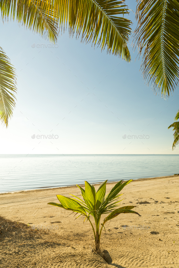 Fresh Palm Tree Growing - Stock Photo - Images