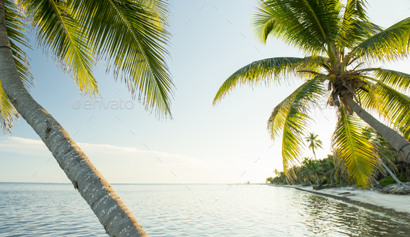 Caribbean Beach Belize - Stock Photo - Images