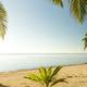 Fresh Palm Tree Growing - PhotoDune Item for Sale