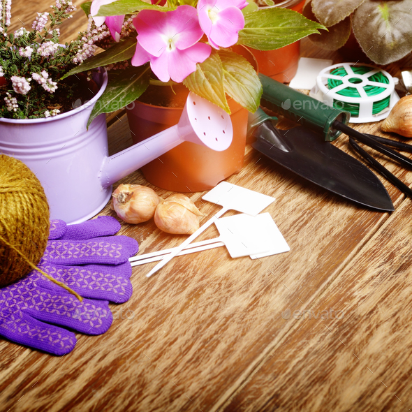 Gardening hobby tools for planting flowers on wooden floor - Stock Photo - Images