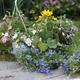 flowers in the garden - PhotoDune Item for Sale
