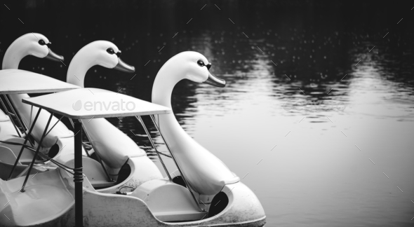 Swan paddle boats in a lake - Stock Photo - Images