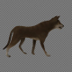 The Brown Dog Walk Pack 3 In 1 - VideoHive Item for Sale