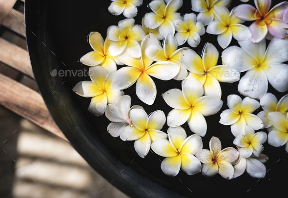 Frangipani flowers at a spa salon - Stock Photo - Images