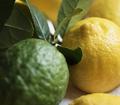 Fresh lemons and limes food photography - PhotoDune Item for Sale
