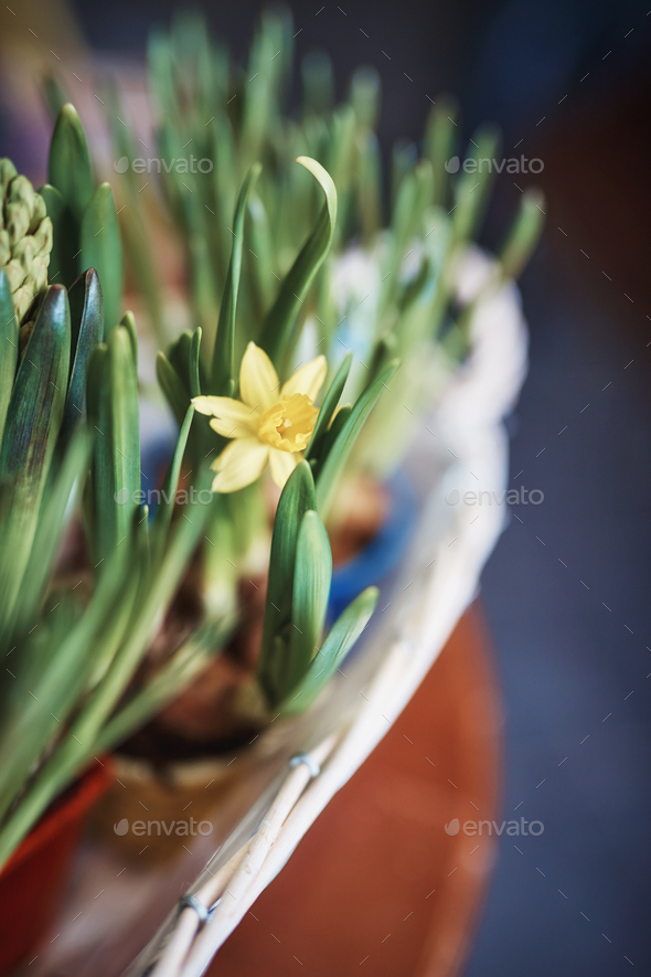Blooming yellow flowers - Stock Photo - Images