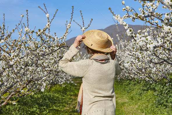 Woman looking cherry blossom. Jerte Valley, Caceres. Spring in Spain - Stock Photo - Images