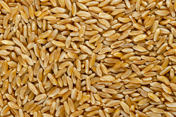 Kamut Khorasan wheat surface from above - Stock Photo - Images
