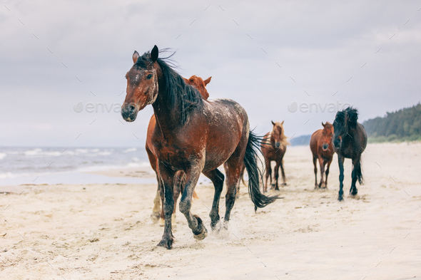 A herd of horses walking on the windy seashore. - Stock Photo - Images