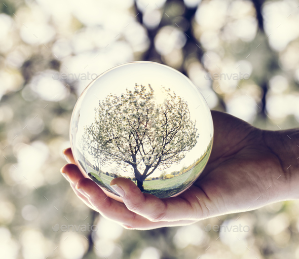 A tree reflection in a glass ball held by a woman. - Stock Photo - Images