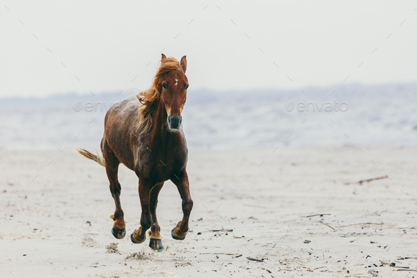 Lonely horse stepping on the sandy beach. - Stock Photo - Images