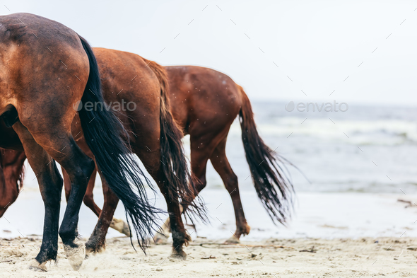 Three horse rumps on the beach in a close up. - Stock Photo - Images
