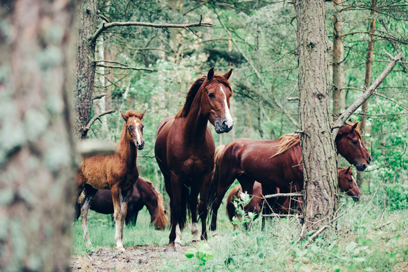 Herd of brown horses walking in the green forest. - Stock Photo - Images