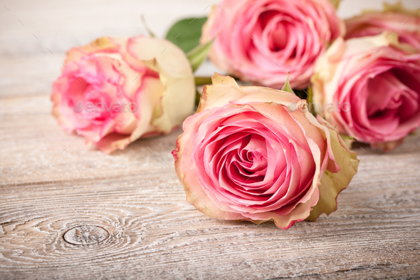 Fresh pink roses on wooden table - Stock Photo - Images
