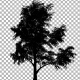 Tree Silhouette - VideoHive Item for Sale