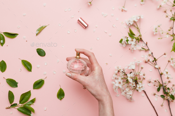 Perfume water in woman hand with spring blossom. Top view on pink isolated background, flatlay. - Stock Photo - Images