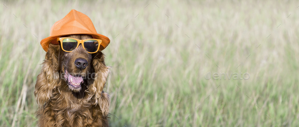 Happy dog banner - Stock Photo - Images