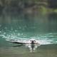 Dog in mountain lake