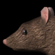 3D Rat Running - VideoHive Item for Sale