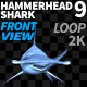 Hammerhead Shark 9 Front View - VideoHive Item for Sale