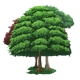 Tree Asset Cartoon