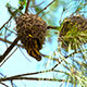 Bird On Nest - VideoHive Item for Sale