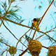 Bird On The Tree - VideoHive Item for Sale