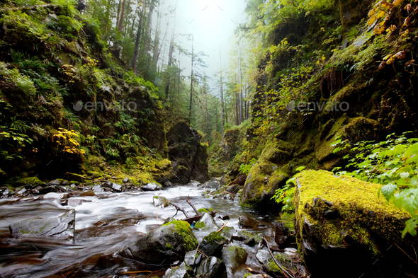 Creek in the forest - Stock Photo - Images