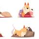 Puppy Design Concept