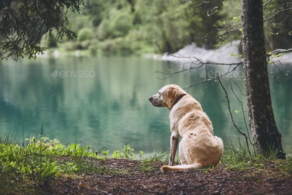 Dog in forest - Stock Photo - Images