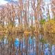 Reflections in the Cypress Swamp - PhotoDune Item for Sale