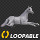 Horse - White - Laying Loop - VideoHive Item for Sale